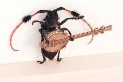 Rasta Banjo Beetle Player