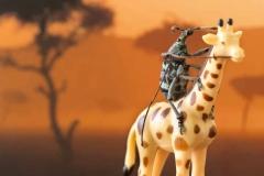 Beetle Safari