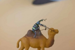 Beetle Caravan
