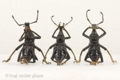 See No Weevil