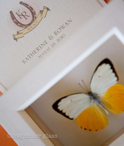 real-framed-butterfly-wedding