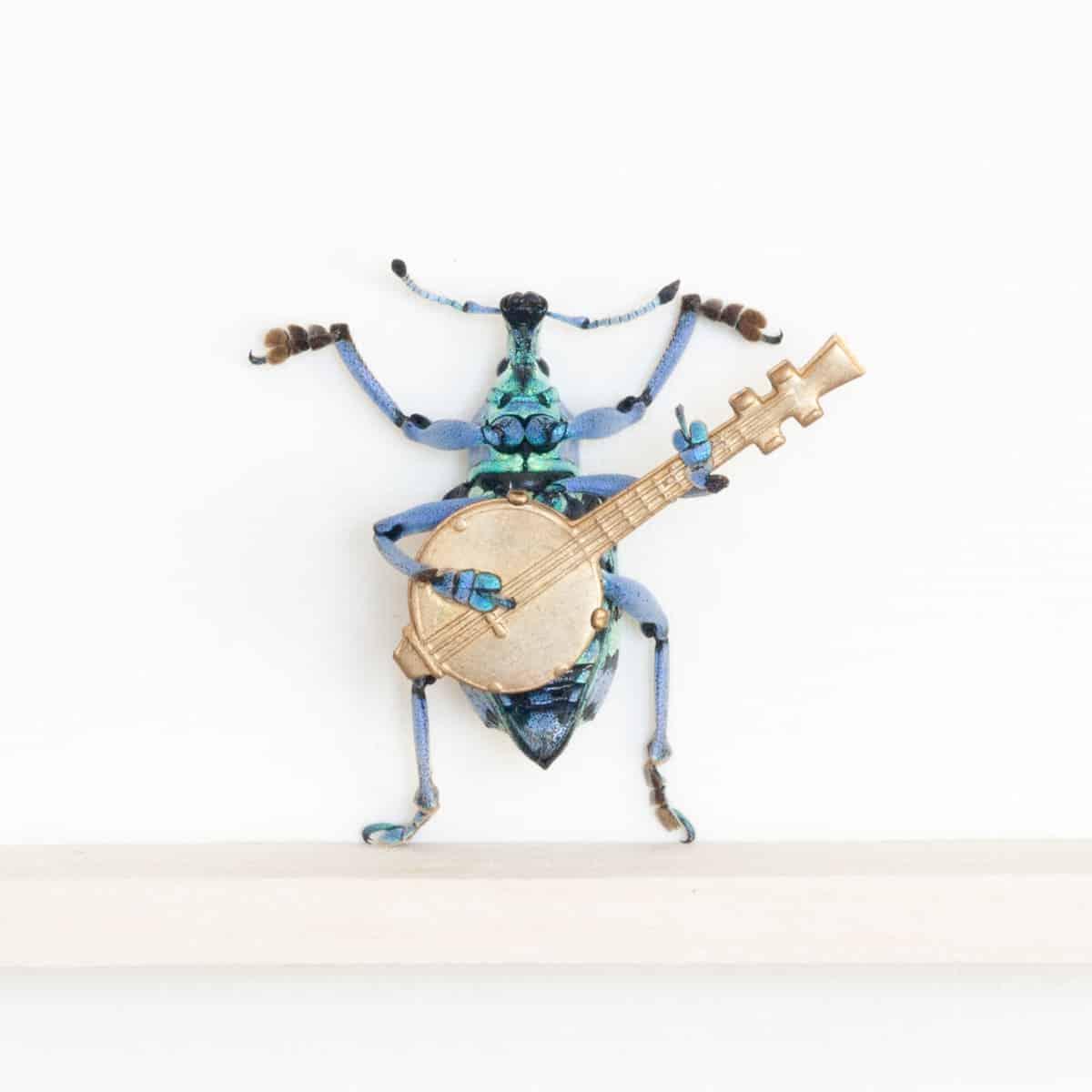 weevil playing banjo