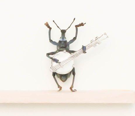 bluegrass beetle