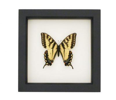 butterflies art