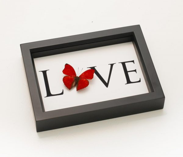 word love with butterfly on it