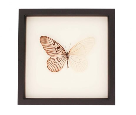 butterfly shadowbox skeleton