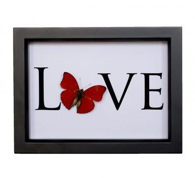 True Butterfly Love
