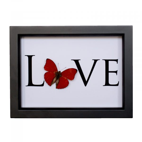 butterfly with word love
