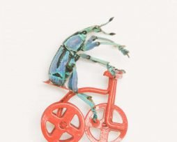 beetle on tricycle