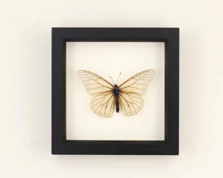framed-butterfly-skeletonized