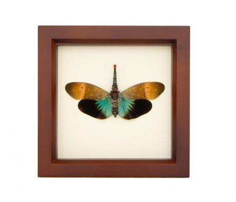 framed lanternfly mount