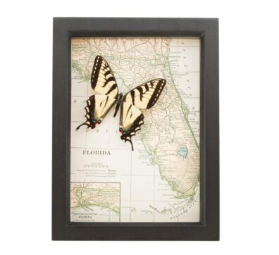 Framed Florida Map Butterfly