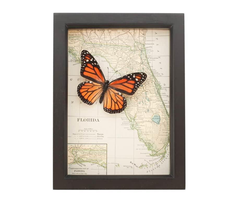 framed map florida butterfly