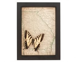 framed map of Georgia tiger swallowtail