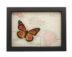 framed map of hawaii with monarch