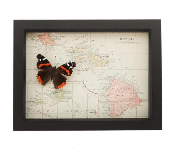 framed map of hawaii red admiral