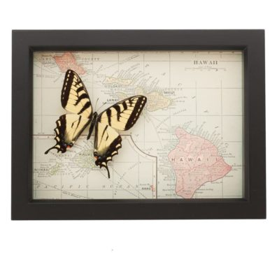 Framed Map of Hawaii with butterfly