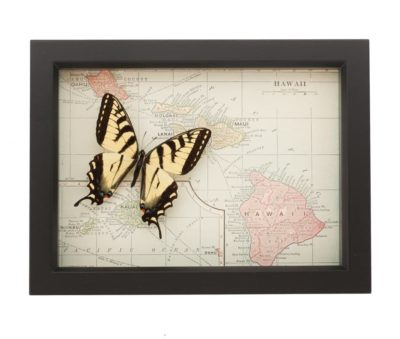 framed map hawaii