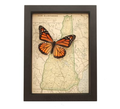 Framed New Hampshire Map Butterfly
