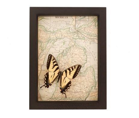 framed map tiger swallowtail