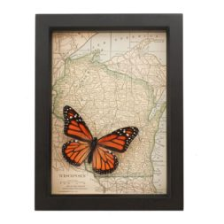framed wisconsin map monarch