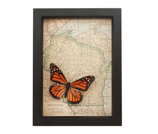 framed wisconsin map monarch