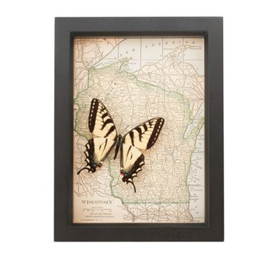 Framed Map Wisconsin Butterfly