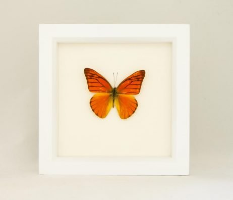 framed orange butterfly
