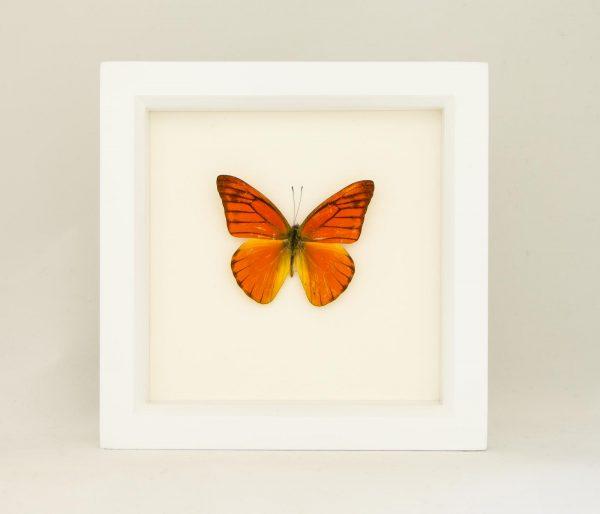 framed orange butterfly