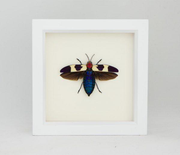 framed red jewel beetle