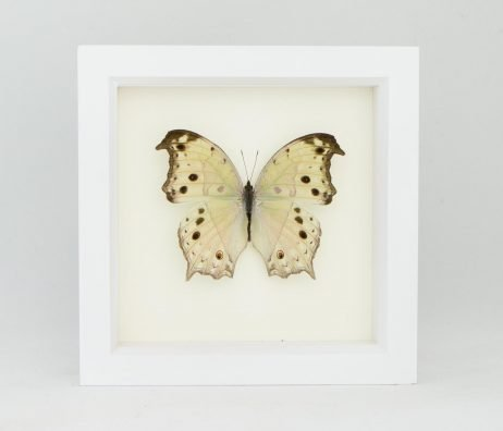 framed silver butterfly
