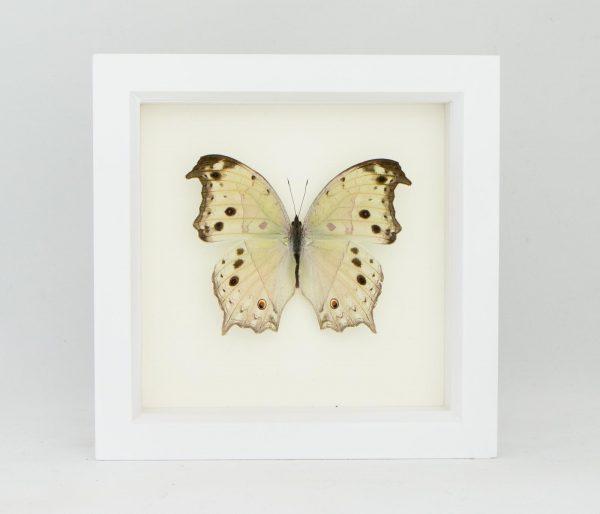 framed silver butterfly