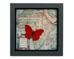 framed wall decor butterfly