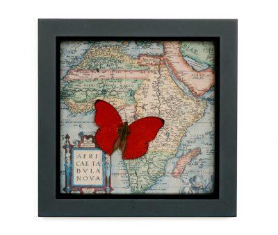 framed wall decor butterfly