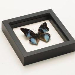 framed western blue charades