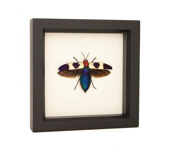jewel beetle taxidermy