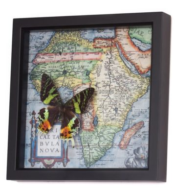 madagascar butterfly map
