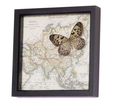 natural history map