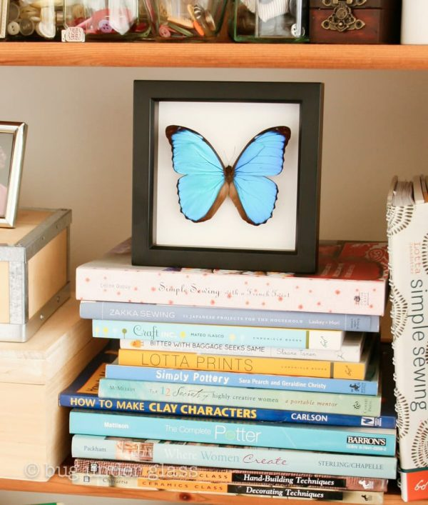 real blue morpho butterfly display