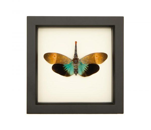 real framed lanternfly display