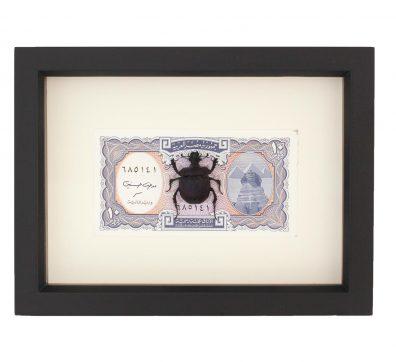 Scarab Beetle on Egyptian Money