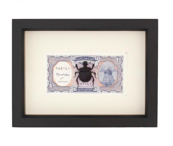 real scarab beetle money
