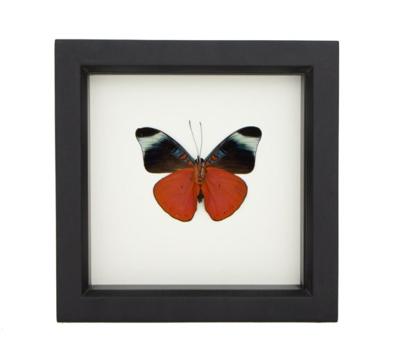 red flasher butterfly decor