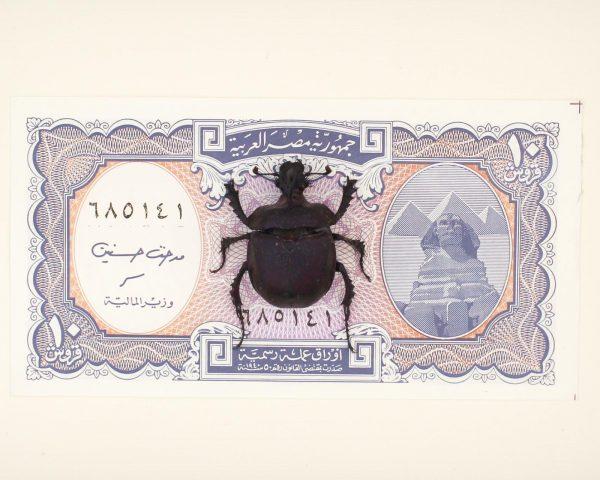 scarab sphinx display