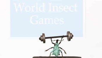 strong-beetle