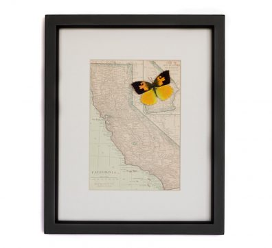 Framed Map California with State Butterfly