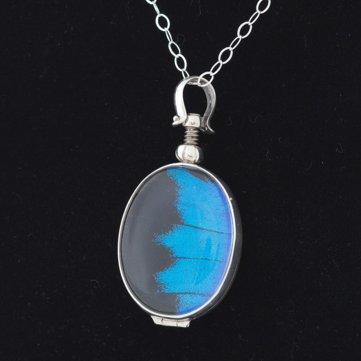 real butterfly wing necklace papilio ulysses
