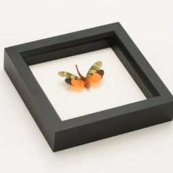 framed lantern fly taxidermy