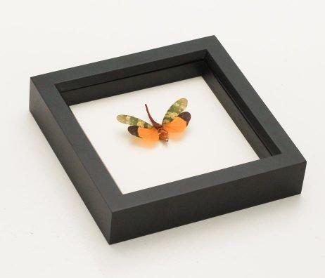 framed lantern fly taxidermy