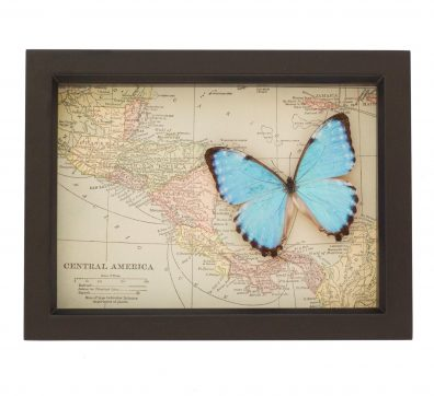 Map of Central America with Butterfly
